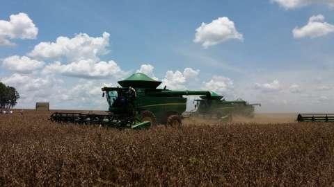 Colheita de soja chega a 82% e plantio de milho avança nas lavouras de MS