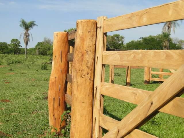 Madeira havia sido usada para fazer um curral para o gado (Foto: PMA/Divulgação)