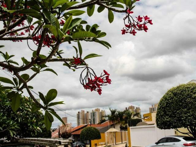 Céu de Campo Grande na tarde desta quarta (Foto: Saul Schramm)