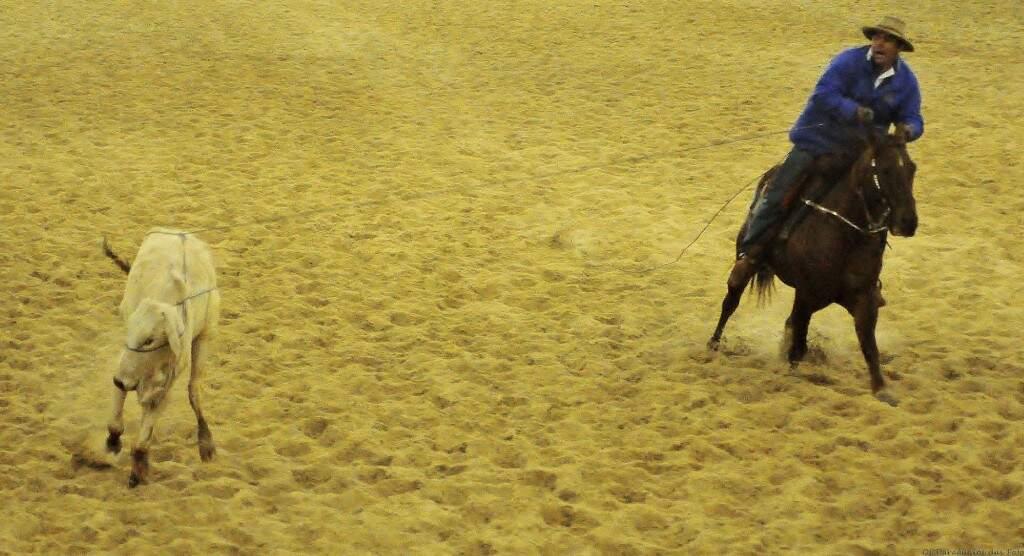 Pela regra, o laçador deve segurar o cavalo no brete até a saída do boi. Se entrar antes na pista perde ponto (Foto: CLC/Divulgação)