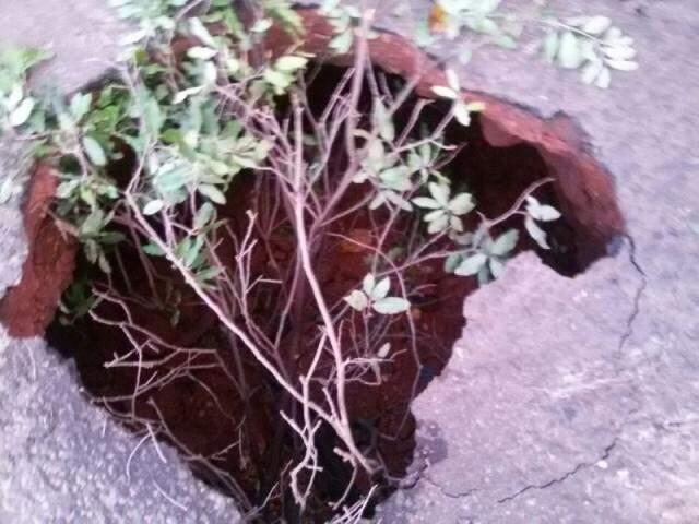 Galho ficou quase escondido dentro da cratera