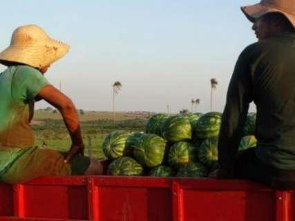 Propriedades com menos de dez hectares cresceram 39% em MS