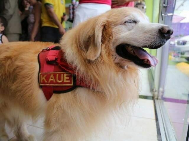 """Kauê, cão que ficou conhecido como """"cãotearapeuta"""" no Corpo de Bombeiros e visitava crianças. (Foto: Arquivo/Marcos Ermínio)"""