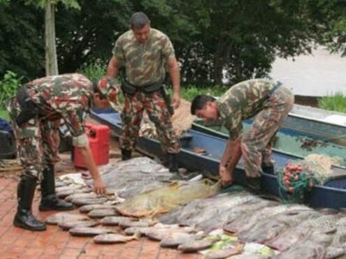 No mês de setembro, uma grande quantidade de peixes foram apreendidos. (Foto: divulgação/PMA)