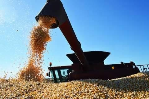 Conab negocia em leilões mais 120 toneladas de milho de MS