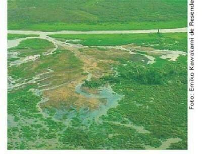 Os chamados arrombados no rio Taquari. (Foto: Divulgação)