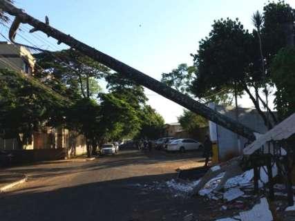 Ventania derruba árvore e deixa bairro sem energia elétrica nesta manhã