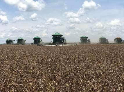 Boa produtividade da soja pode ajudar a reduzir perdas da pecuária