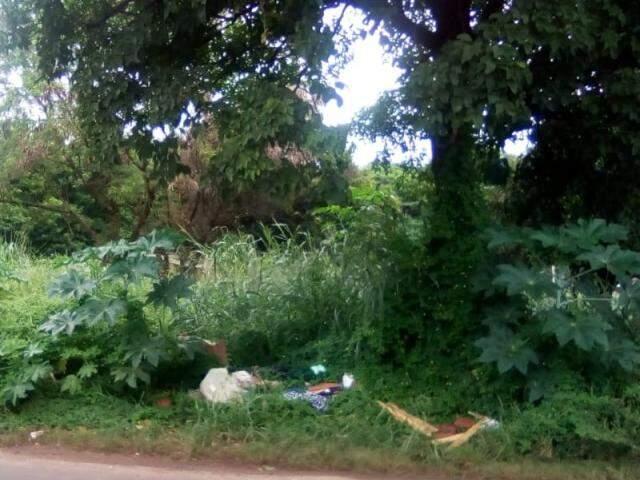 Terreno abandonado na Rua David Correa Leite, no Universitária (Foto: Direto das Ruas)