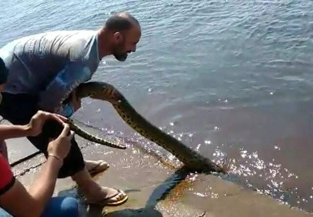 Pescadores puxam sucuri pelo rabo e filmam ação (Foto: Reprodução)