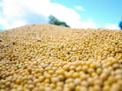 Mato Grosso do Sul já vendeu 71% da soja colhida na safra 2017/2018