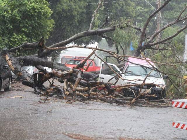Árvore caiu sob veículo e interditou via no Jardim Paulista. (Foto: Allan Nantes)