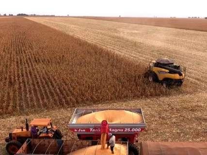MS colhe 7,8 milhões de toneladas de milho, queda de 25% na 2ª safra