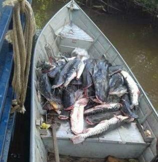 Barco lotado de peixes que também circula nos grupos de Whatsapp.. (Foto: Reprodução)