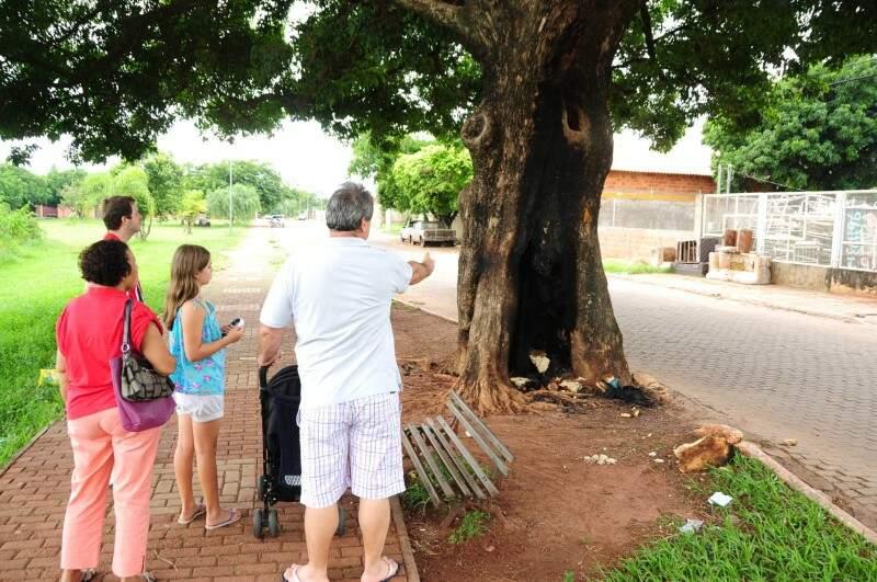 Árvore está com tronco queimado. (Foto: Rodrigo Pazinato)