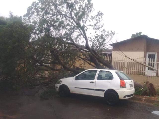 Árvore caiu sobre carro no Bairro Estrela do Sul (Foto: Direto das Ruas)