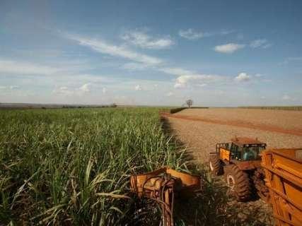 Geada afeta lavouras de cana em MS e produção cai 6,7%, segundo a Conab