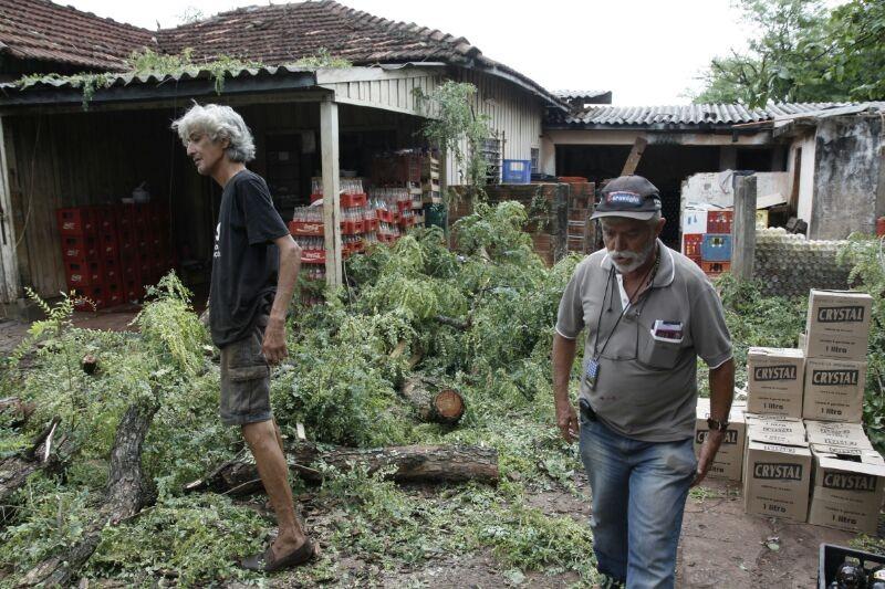 Dono de depósito reclama de prejuízo com queda de árvore na manhã de hoje (Foto: Cleber Gellio)