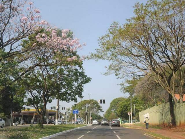 Céu claro e sol forte na tarde desta quarta-feira na avenida Mato Grosso em Campo Grande (Foto: Paulo Francis)