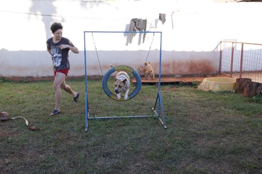 Os cães precisam de um ambiente para gastar as energias.  (Foto: Kísie Ainoã)