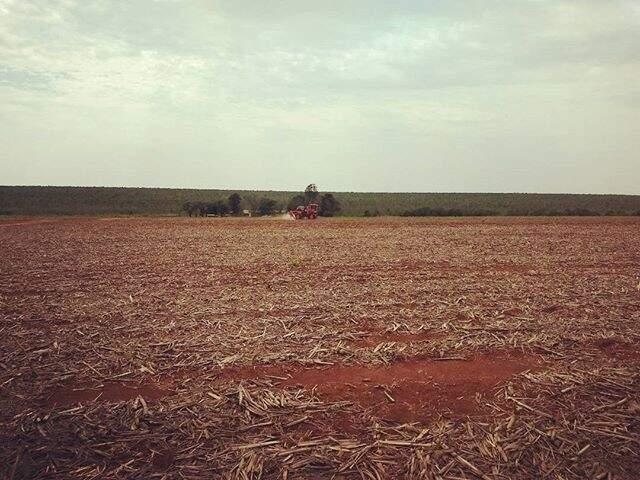 Plantio da soja já passou da metade da área estimada para esta safra (Foto: Divulgação/Aprosoja)