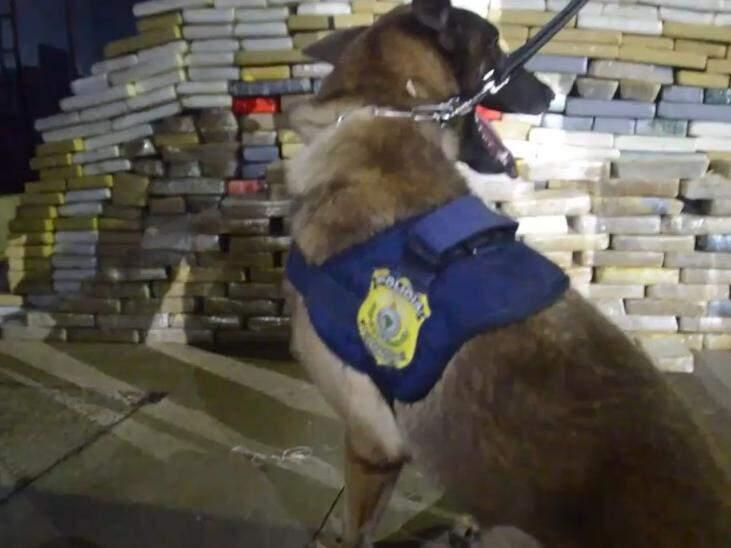Cães ajudam PRF a achar cocaína em tanque de combustível de caminhão