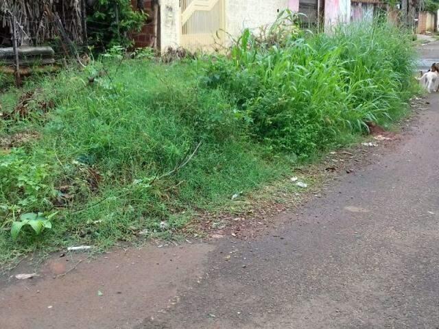 Matagal já ocupa metade da via (Foto: Direto das ruas)