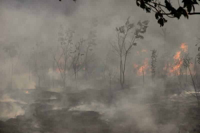Parte da vegetação foi destruída pelo fogo. (Foto: Fernando Antunes)
