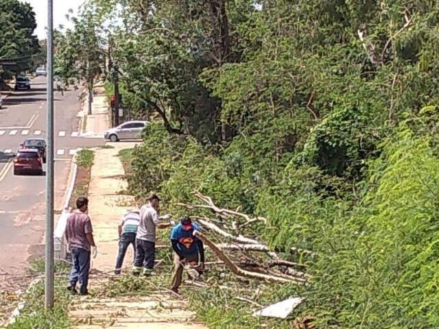 Equipes de limpeza, ontem, faziam remoção de galhos em avenidas da cidade (Foto/Divulgação)