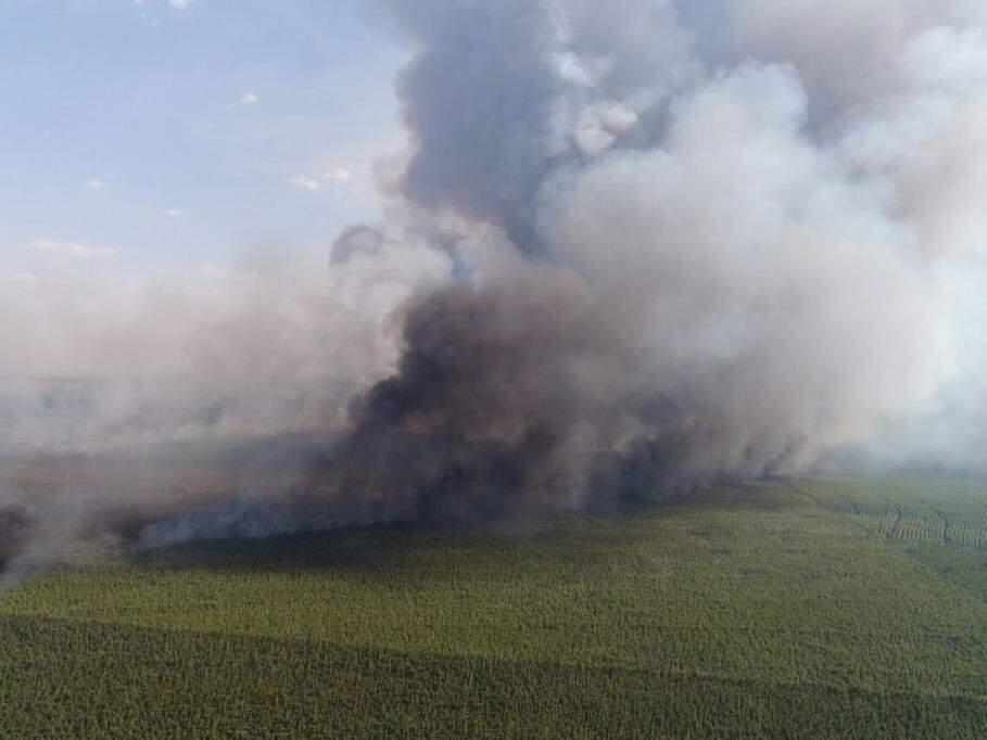 Fumaça em área atingida pelo incêndio (Foto: Andrei Luiz)