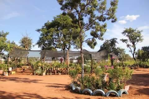 Viveiro de pimentas exóticas é paixão de aposentada no Jardim Veraneio