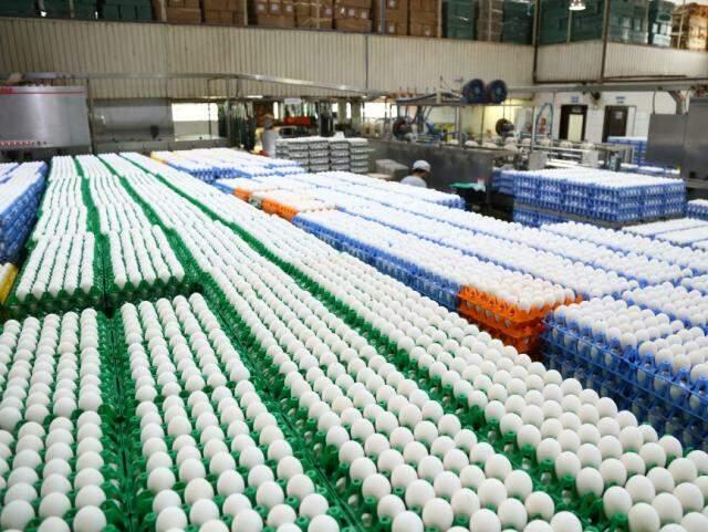 Ovos na central de seleção da Camva; são cerca de 750 mil ovos por dia (Foto: Marcos Ermínio)