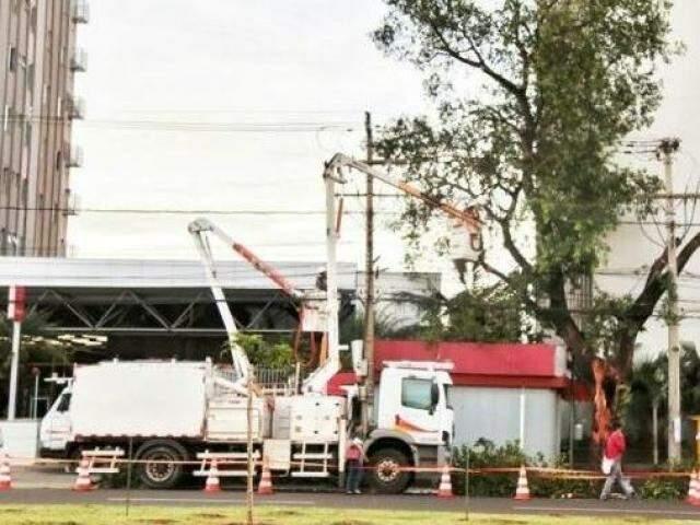 Equipes da Energisa realiza poda de árvore em Campo Grande. (Foto: Fernando Antunes)