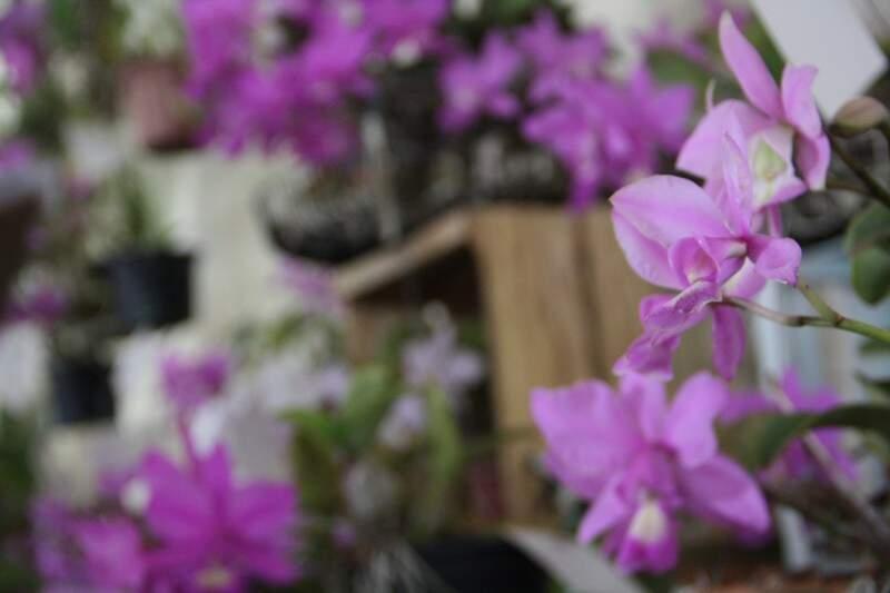 Espécia da flor agora é símbolo de Campo Grande e causou surpresa a moradores (Foto: Marcos Ermínio)