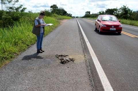 Blitz educativa alerta motoristas sobre atropelamentos de animais na BR-262
