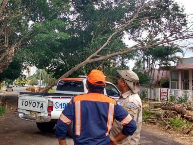 Defesa Cível e Bombeiros analisam a situação para fazer o corte do galho (Foto: Yarima Mecchi)