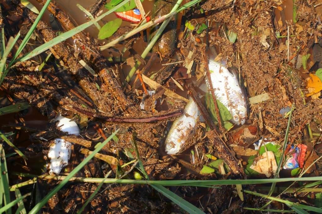 Peixes mortos e frascos de remédio dividem espaço nas águas (Foto: André Bittar)