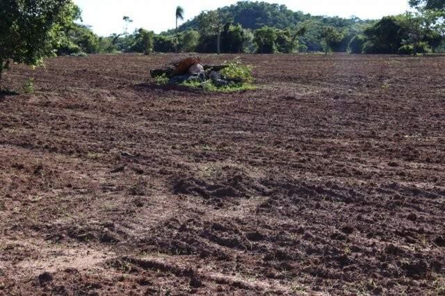 Fazenda arrendada trocou pastagem por lavoura a 21 km da área urbana de Bonito. (Foto: Kisie Ainoã)