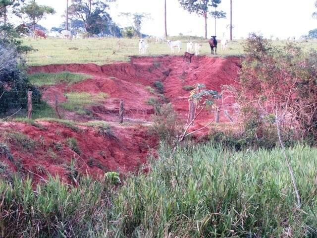 Com uso de um GPS, foi verificado desmatamento de em toda a extensão da APP (Área de Preservação Permanente), totalizando 24 hectares. (Foto: Divulgação PMA)