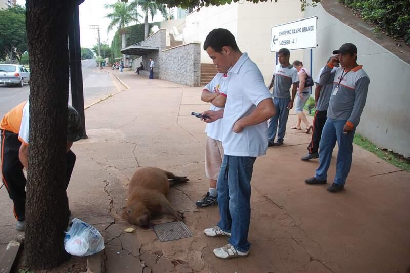 Com o impacto, capivara foi lançada para a calçada. Foto: Simão Nogueira
