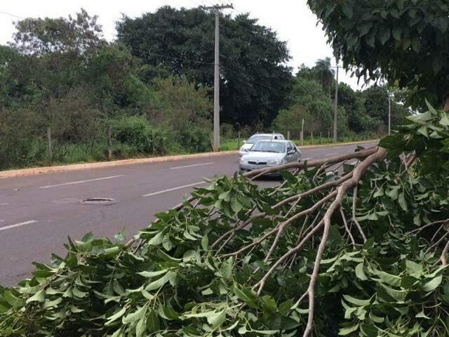 Parte de árvore caiu na avenida Interlagos (Foto: Direto das Ruas)
