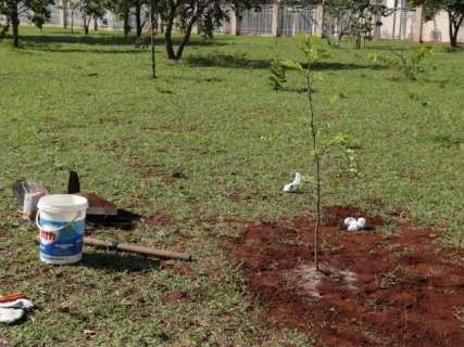 Plantar árvores é bonito, mas nem todas são saudáveis para cidade