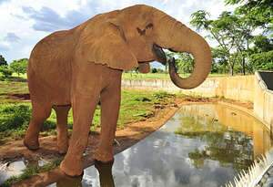 Animais do Le Cirque apreendidos em MS podem ser devolvidos a donos