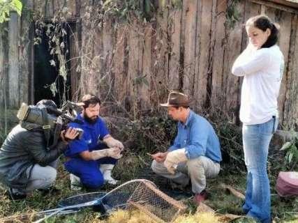 Iagro instala armadilhas para capturar morcegos após caso de raiva bovina