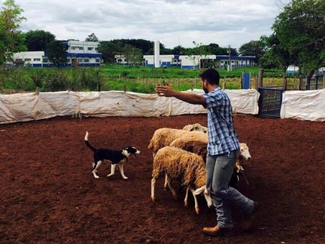 Acadêmicos colaboram com o treinamento dos cães (Foto: Divulgação/Uniderp)