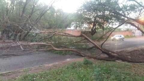 Com ventos fortes, árvore cai em cima de casa e assusta idosos
