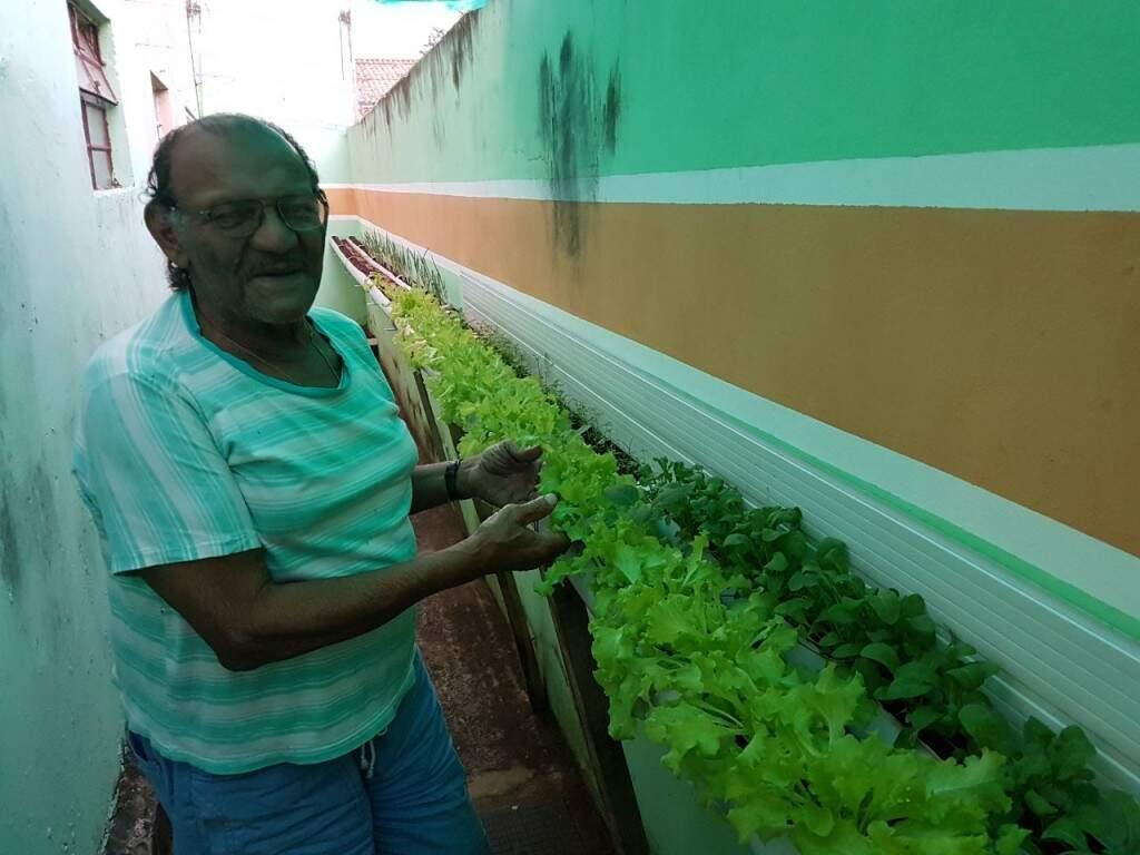 Cuidar das hortaliças virou uma distração e uma economia para a família. (Foto: Thailla Torres)