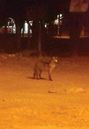 A única foto de um dos animais, que circula pelos celulares no Terminal, foi feita bem de longe. (Reprodução celular)