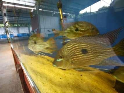 Empresa que vai concluir o Aquário do Pantanal será anunciada na semana que vem