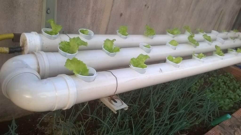 Sem espaço, horta hidropônica no PVC foi a solução para uma alimentação saudável. (Foto: Wenndel de Jesus).